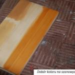 polka_sosnowa